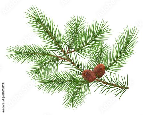 Fotografia, Obraz  Green fluffy cedar branch and two cones
