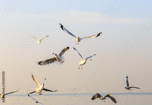 Photo Stands Bird Flying seagulls are eating food in the morning