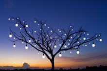 Silhouettes Trees With Bulb Li...