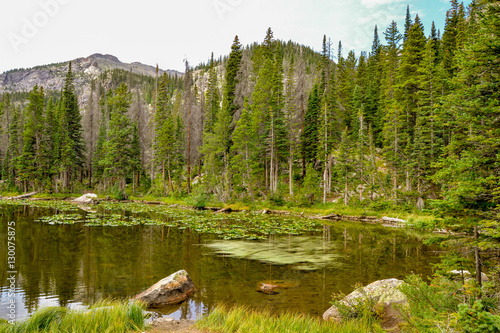 wooded banks of Nymph Lake scenic view Rocky Mountain National Park, Estes Park, Colorado, Untied States #130075875