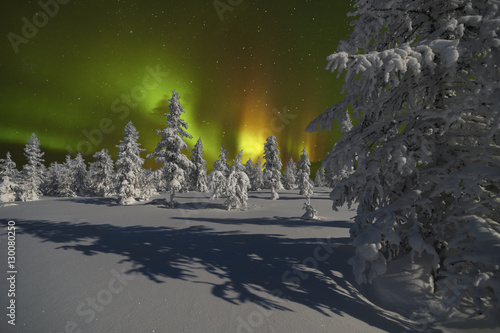 Photo  Northern Lights - Aurora borealis over snow-covered forest