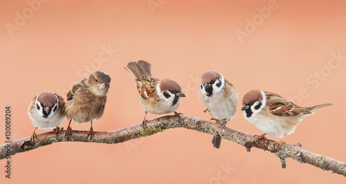 Photo  small funny birds sparrows sitting on a branch on the panoramic picture