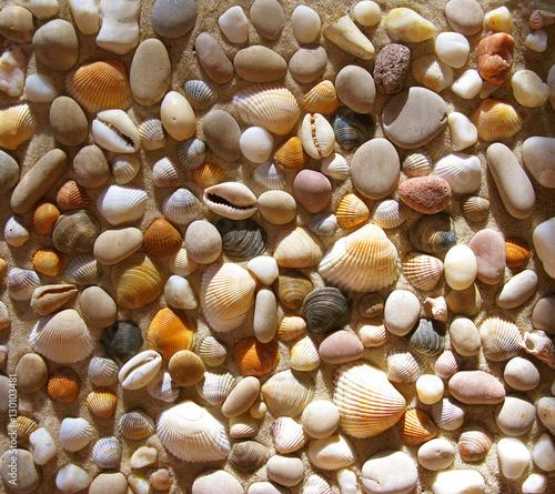Naklejka na szybę Small seashells and stones. Pattern.