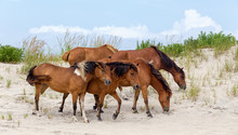 Assateague Island Wild Ponies ...