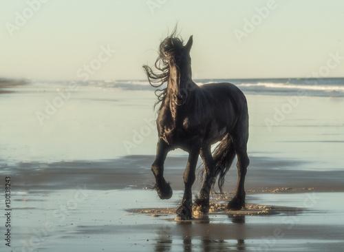 Friesian horse running on ocean shore beach Poster