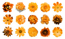 Mix Collage Of Natural And Surreal Orange Flowers 15 In 1: Dahlias, Primulas, Perennial Aster, Daisy Flower, Roses, Peony Isolated On White