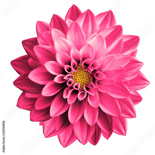 Poster de jardin Dahlia Surreal pink flower dahlia macro isolated on white