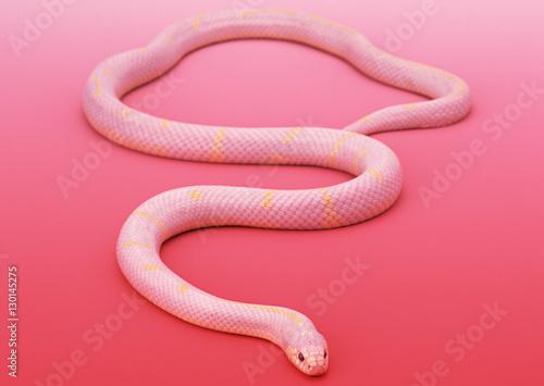Obraz na plátně Albino California king snake