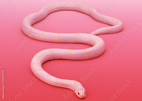 Fotomural Albino California king snake