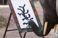 Elephant Painting, Chiang Mai