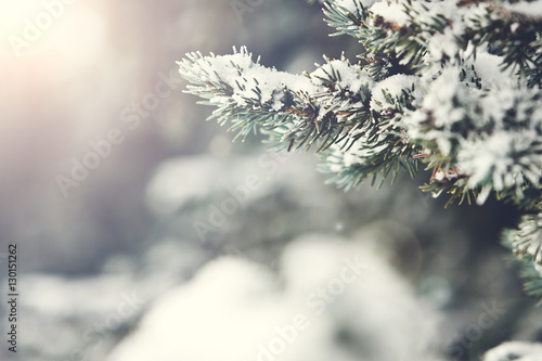 Photo  Fir Branch With Snow And Sun Flare During Winter