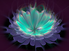 Fractal Flower On Black Background, Abstract Computer-generated Image