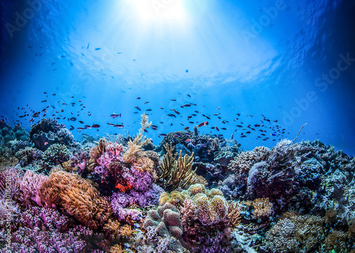 underwater-world-landscape