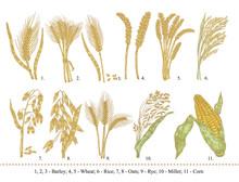 Cereal Set. Hand Drawn Barley,...