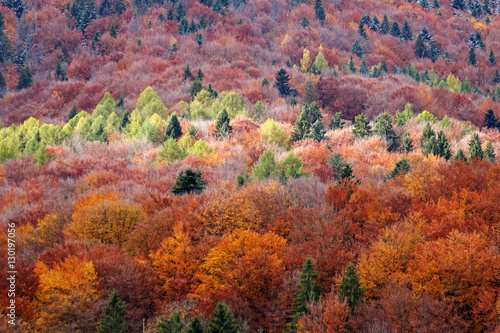 Fotografie, Obraz  Carpathian forest in autumn