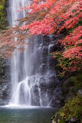 Fototapeta Wodospad Minoo waterfall in autumn, Osaka, Japan