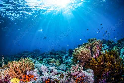 Photo sur Toile Recifs coralliens Underwater world landscape