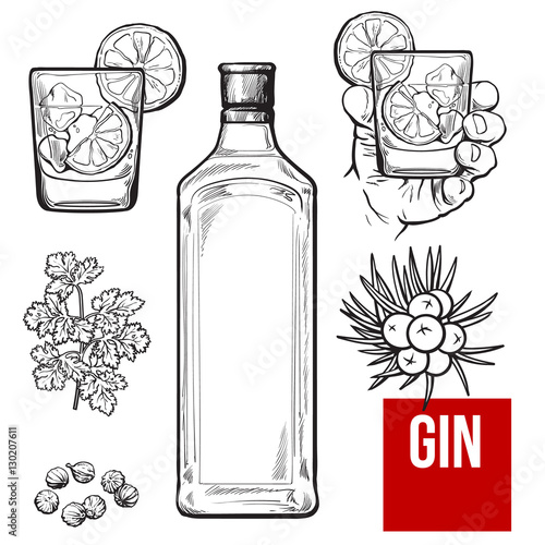 Fototapeta Gin bottle, shot glass with ice and lime, juniper berries, parsley, cardamom, sketch vector illustration isolated on white background