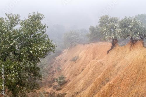 Bosque de encinas y cárcavas de arcilla. Quercus ilex. © LFRabanedo