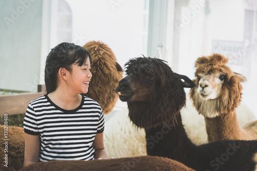 Poster Lama Asian girl playing with cute alpaca