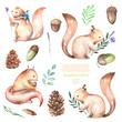 Collection, set of watercolor cute squirrels and forest elements illustrations, hand drawn isolated on a white background