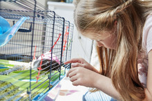 A Girl Looking Into A Pet Cage At Her Small Brown Hamster.