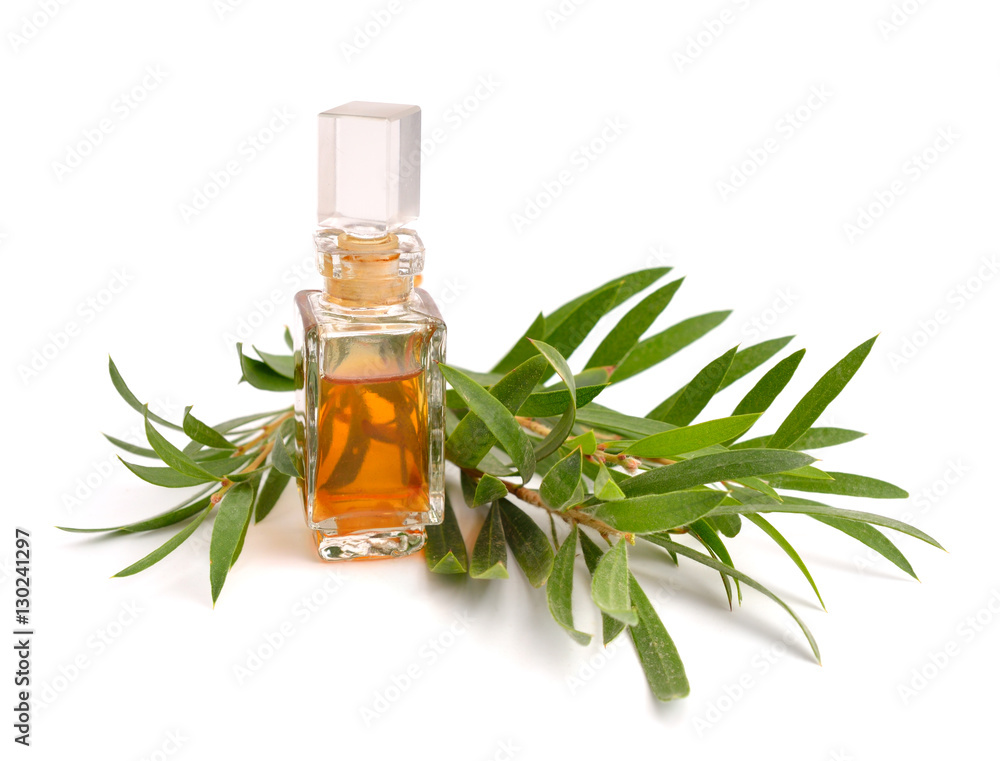 Fototapety, obrazy: Melaleuca essential oil in the pharmaceutical bottle with twigs.