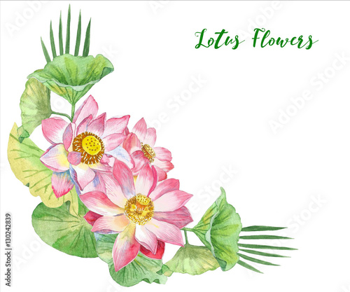 Lotus Flowers. Hand drawn illustration