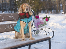 Dog On A Date