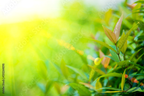 Poster Jaune lighting flare effect on Nature green leaf with green color bokeh background.