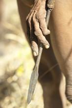 Hand Of A Jul'hoan !Kung Bushman On A Hunt Holding His Spear, Bushmanland, Kalahari Desert, Namibia