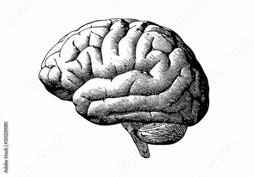 Fotografie, Obraz  Engraving brain with black on white BG