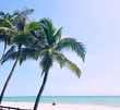 Ocean, golden beach, kites and kite surfers off the north Brazilian coast