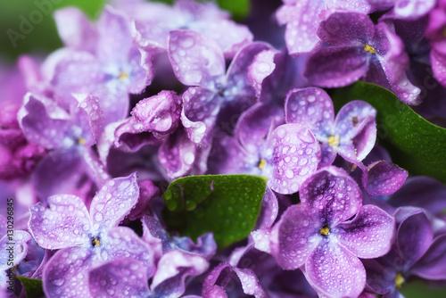 makrofotografia-wizerunek-wiosny-w-postaci-pieknych-kwiatkow-bzu