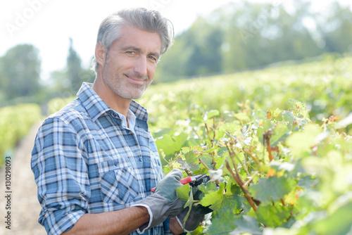 Photo man working in a vineyard