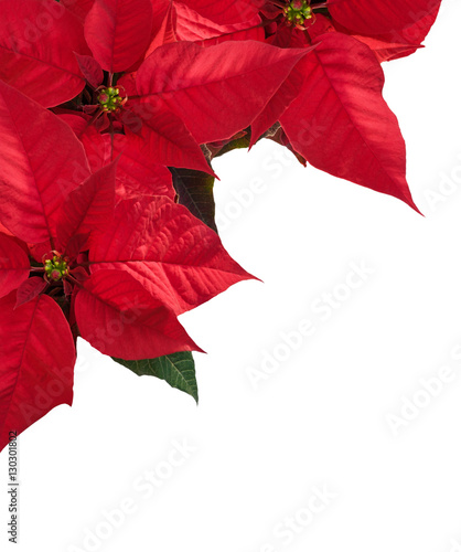 christmas border with three red poinsettia flowers in corner