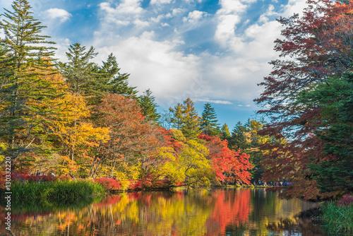 Fotografie, Obraz  Autumn colours pond