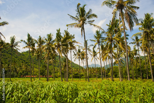 Tropical palm trees, Mangsit Beach, Lombok, Indonesia, Southeast Asia, Asia