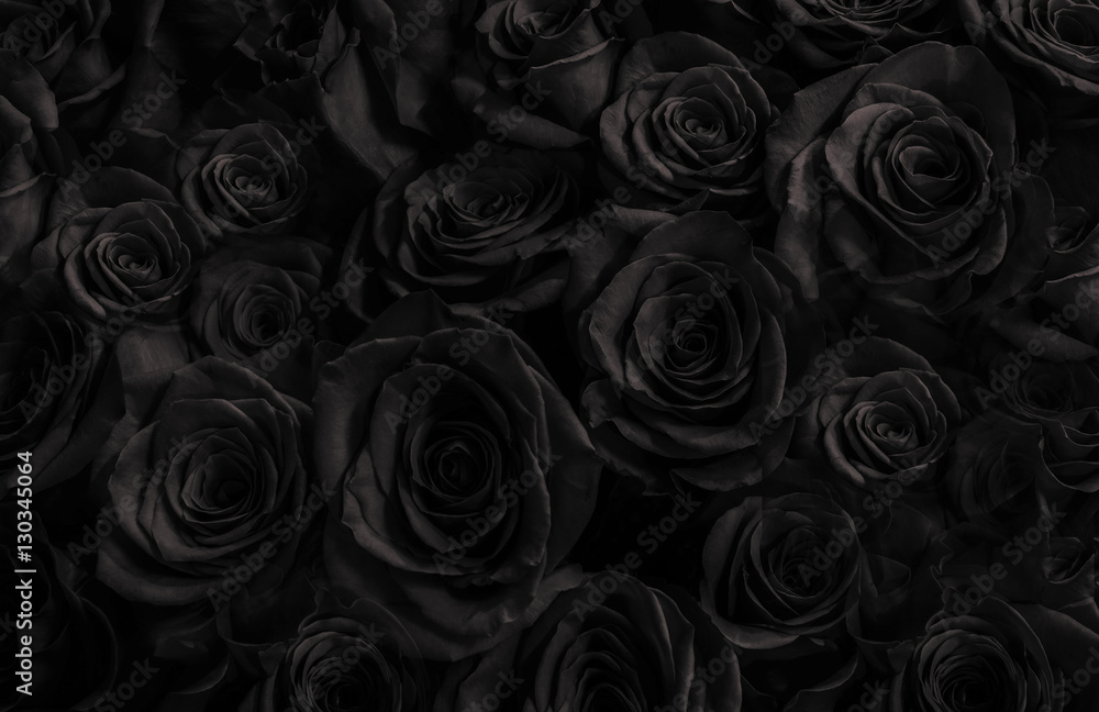 Fototapety, obrazy:  Black roses background. greeting card with  roses