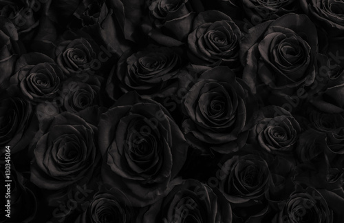 Black roses background. greeting card with roses