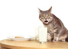 Cute Cat Drinking Milk, Closeup