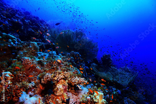 Papiers peints Recifs coralliens coral reef in the warm sea
