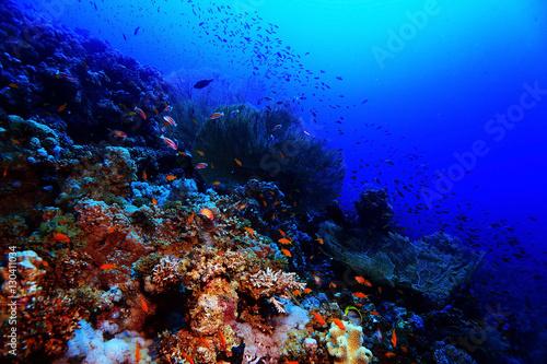 Staande foto Koraalriffen coral reef in the warm sea