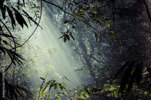 Türaufkleber Dschungel Sunlight rays pour through leaves in a rainforest at Sinharaja F