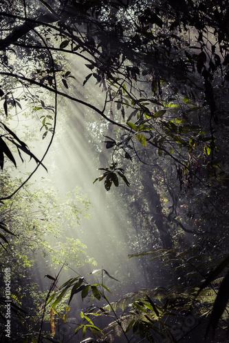 promienie-sloneczne-wpadaja-przez-liscie-do-lasu-deszczowego-w-sinharaja-f