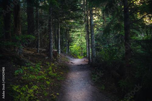Dark forest path. Canvas-taulu