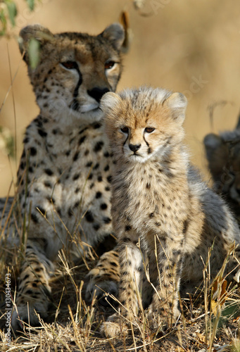 Malaika Cheeta with her cub, Masai Mara