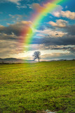 Fototapeta Tęcza -  Rainbow in the sky pointing a lonely tree