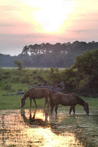 horses grazing in pond water at sunset