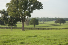 Lush Horse Farm Acreage With P...